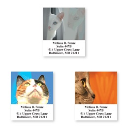 Faces Of Cats Sheeted Address Label Assortment
