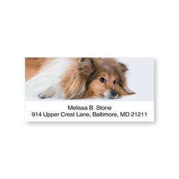 Sheltie Sheeted Address Labels